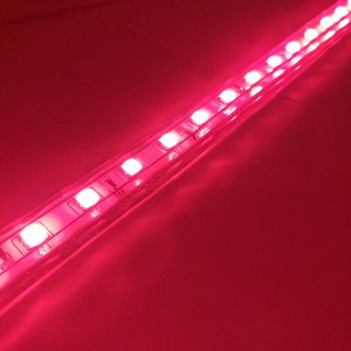 Tira de LED RGB 5050 230vAC IP65 en rojo